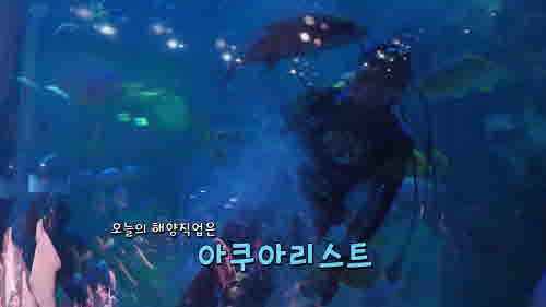 꿈꾸는 장보고 (아쿠아리스트)